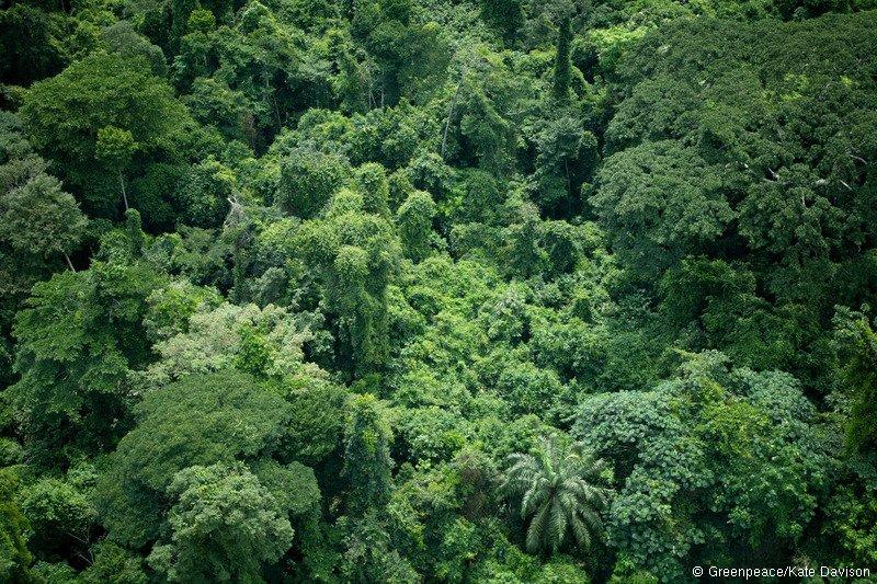 Afrikanischer Dschungel