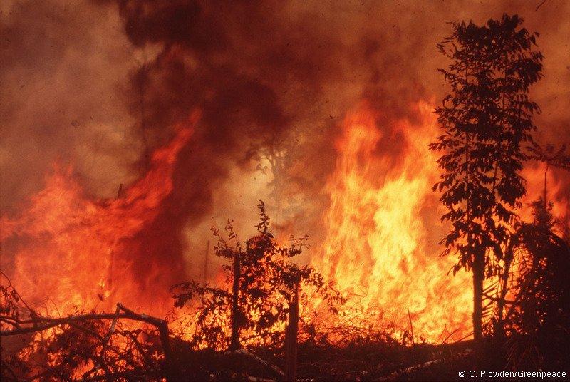 Regenwald Brand