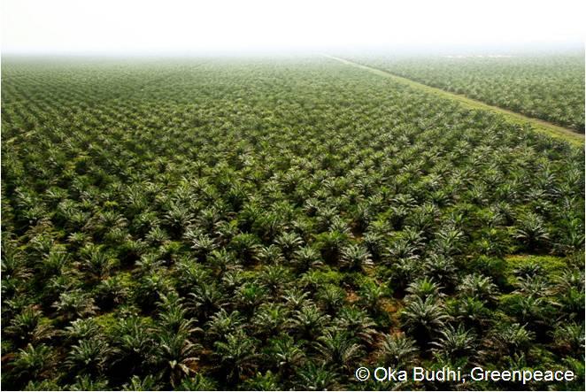 Palmölplantage, Provinz Riau